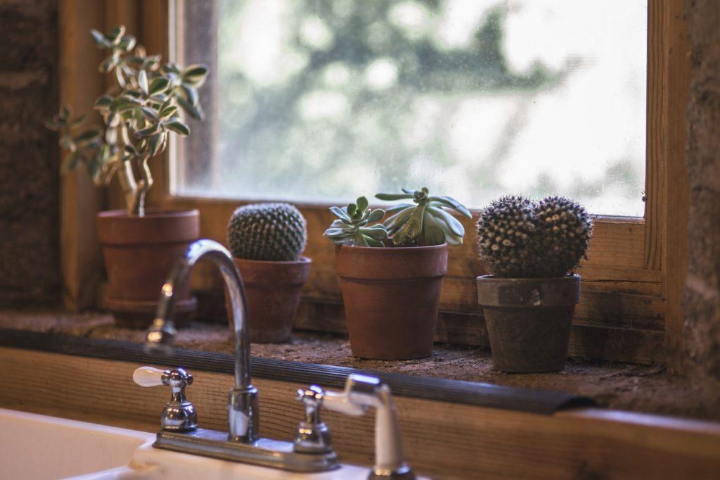 Plants in a kitchen window