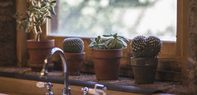 Plants in a kitchen window